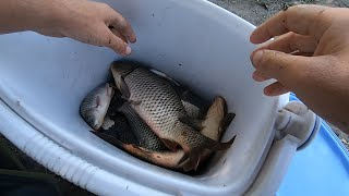 Рыбалка на фидер в сентябре Ловля карася и сазана на реке GoPro HERO 7 Black