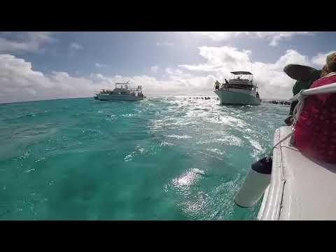 Cayman Islands Stingray City 02/01/18