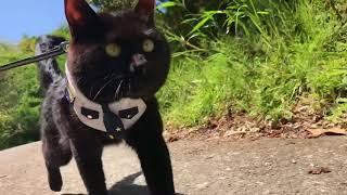 大好きな猫が散歩から帰ってきた時の犬の反応⁈ Dog grooming cat.