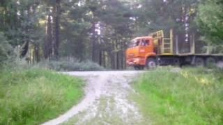 Приколы в лесу