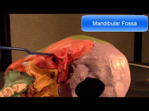 Human Cranial Osteology: Part IV, The Temporal Bone