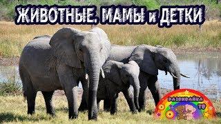 Познавательные видео для малышей. Животные. Родители и детки.