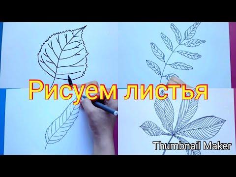 Как нарисовать веточку осины