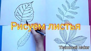 Как нарисовать листья березы,каштана,ивы, рябины/How to draw birch,chestnut,willow,Rowan leaves