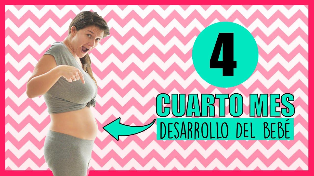 Cuarto mes de embarazo | Desarrollo bebé mes a mes | Mes 4 | Segundo  trimestre