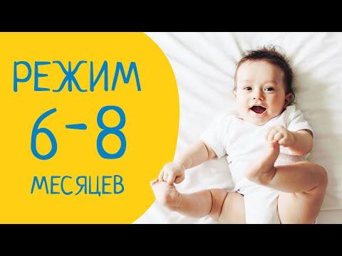Режим дня ребенка от 6 до 8 месяцев