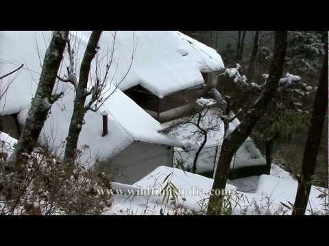 Landour all white with snow!