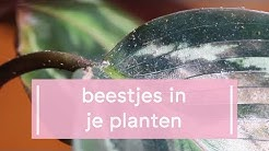 Dit moet je weten over beestjes in je planten
