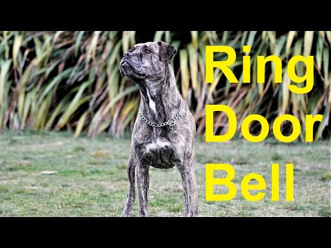 potty-training:-train-your-dog-to-ring-a-bell-to-go-outside