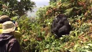2014年7月発「自然を巡るルワンダ周遊の旅・・・8日間」より ルワンダの...