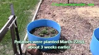 CHN Potato Barrel 1st Update