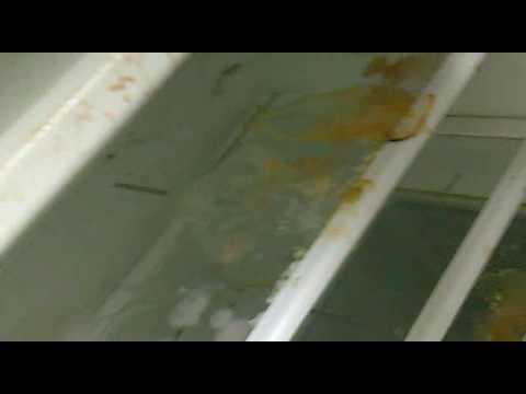 Schimmel Kühlschrank Iiihh Youtube