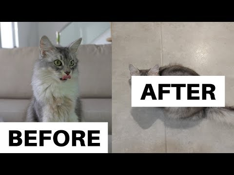 CURLY GIRL Method for CATS