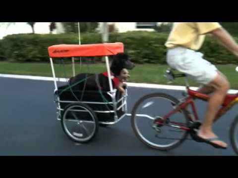 Dog Cart for Bicycles.