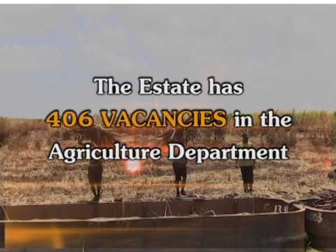 Uitvlugt Employment Opportunity