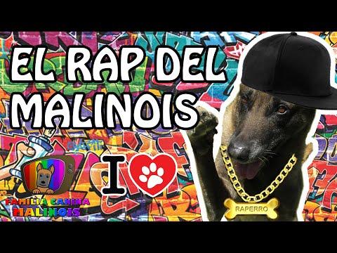 El RAP del perro MALINOIS | Familia Canina Malinois y Adiestramiento