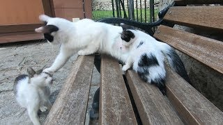 Mother cat doesn't let male cats approach her kitten