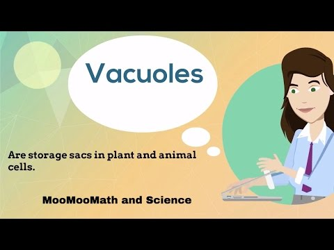 Vacuoles-Cell Organelles