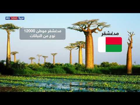 خطر انقراض النباتات يزيد بمعدل 350 مرة عن الطبيعي