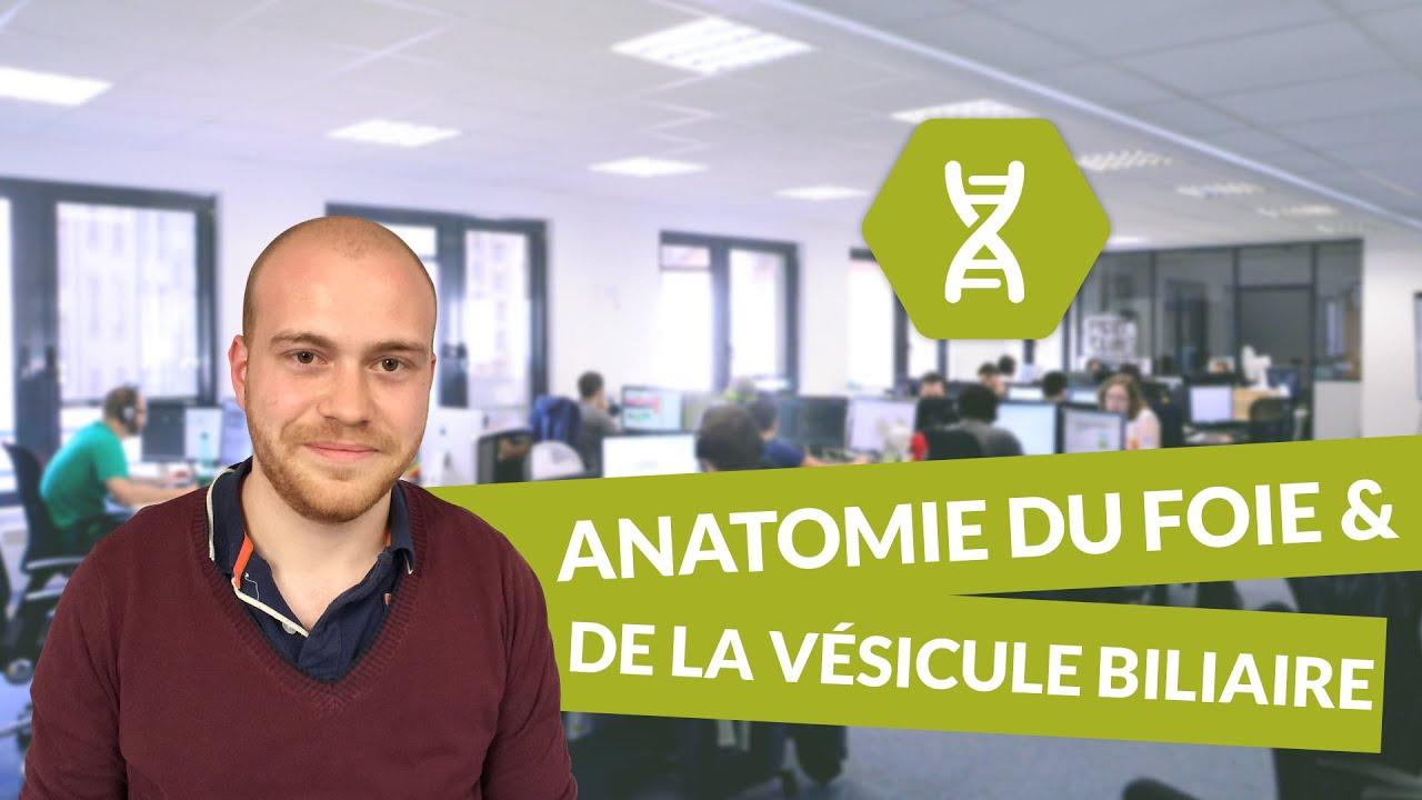 Physiologie digestive, anatomie du foie et de la vésicule biliaire ...