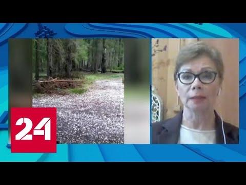 """""""Погода 24"""": до конца недели в европейской части России не потеплеет - Россия 24"""