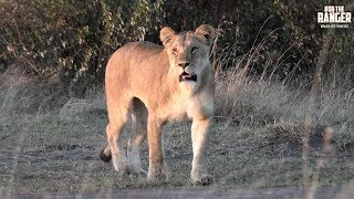 The first sighting of a two week safari hosted for Wild Extracts at...