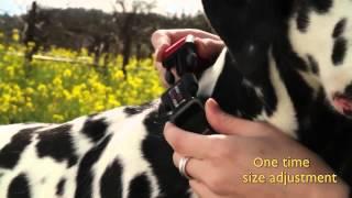 Ezydog Kilitli Terbiye Tasması Checkmate  Dog Training Collar Www.turuncupet.com