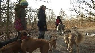 Die Angst beim Gassi-Gehen: Hundehasser legen Giftköder aus