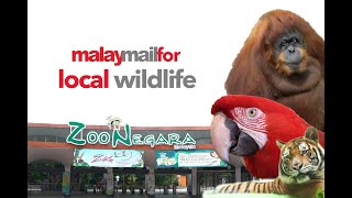 Malay Mail For : Local Wildlife