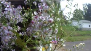 Reclaimed Wood Flower Vase - (cyber Monday Pushback Part 3)