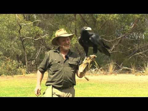 G'DAY SA TRAVEL Episode 8 - Kangaroo Island (Day 2)