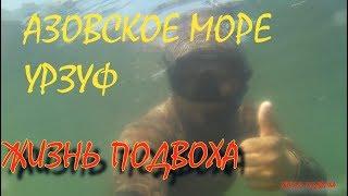 АЗОВСКОЕ МОРЕ / Подводная охота / Урзуф поймал бычка руками/ Жизнь подвоха