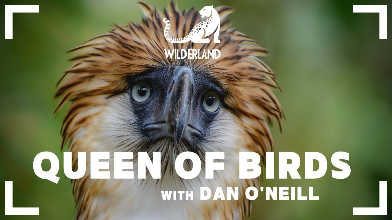 QUEEN OF BIRDS | Documentary Film | The Great Philippine Eagle