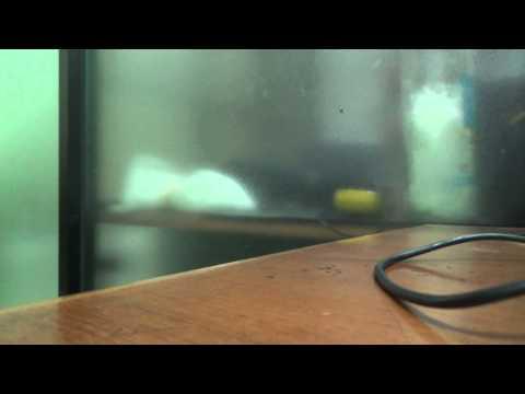 Dithubad AD Live Stream