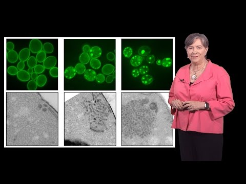Susan Lindquist (Whitehead, MIT / HHMI) 1b: Protein Folding in Neurodegenerative Disease