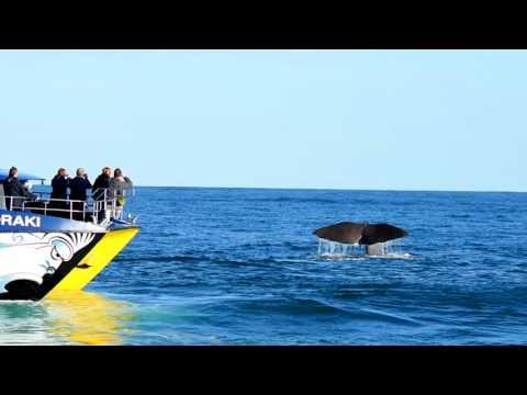 Whale Watch Kaikoura -  Marine Experience in 90 Secs