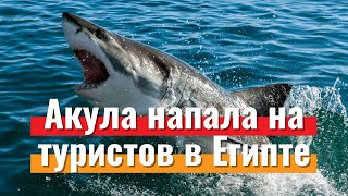 Нападение акул на украинских туристов в Египте что известно Новости туризма 2020 Travelcom