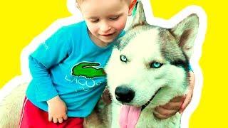 Красивая собака Хаски и Гриша!  Чудо #собаки и дети Позитивное видео с животными Щенки Хаски позитив