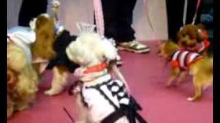福岡県のマリンメッセ福岡で行われた「アイラブホームフェア」。その中...