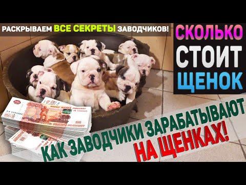 Вся правда о заводчиках! Бизнес на собаках. Сколько реально должен стоить щенок ?