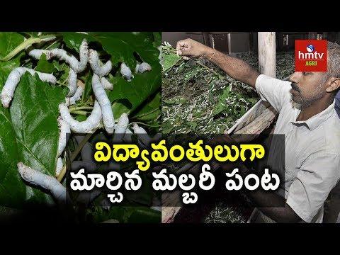 Sericulture | Mulberry Cultivation | Terrace Garden | hmtv agri