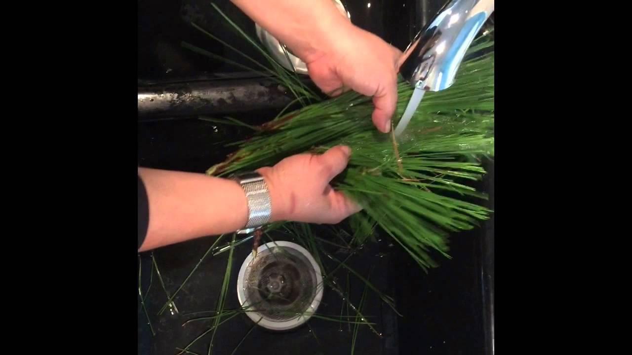 polen de pino y disfunción eréctil