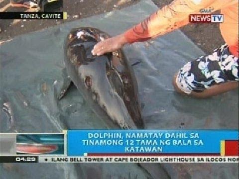BP: Dolphin sa Tanza, Cavite, namatay dahil sa tinamong 12 tama ng bala sa katawan