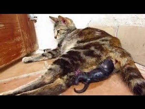 C mo saber si una gata est pre ada youtube for Como saber si clausula suelo