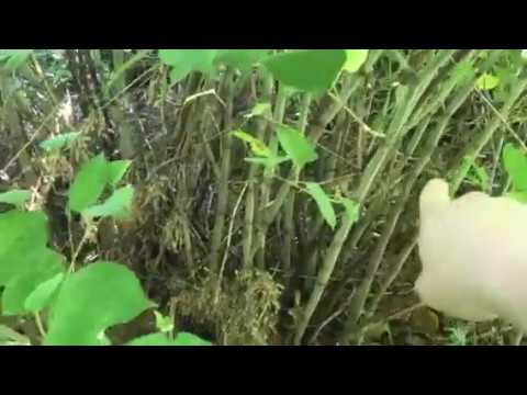 Invasive species in Pennsylvania