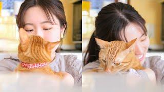 猫が可愛すぎて料理ができません