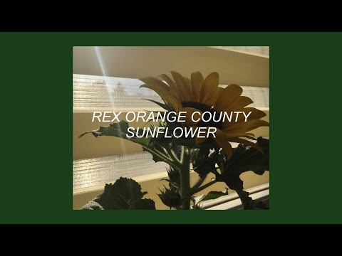 SUNFLOWER // REX ORANGE COUNTY (LYRICS)