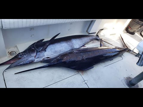 Deep Sea Fishing, Catching Blue Marlin, Jamaica!!