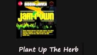 Morgan Heritage Plant Up The Herb Jamdown Riddim