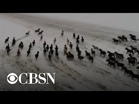 Drone video shows hundreds of horses galloping in the snow